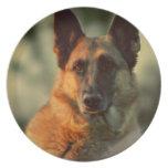 German Shepherd Melamine Plate
