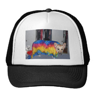 German Shepherd Modeling Clothes Hats