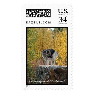German Shepherd on a Rock; Customizable Postage Stamp
