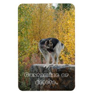 German Shepherd on a Rock; Customizable Rectangular Photo Magnet