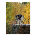German Shepherd on a Rock Postcard