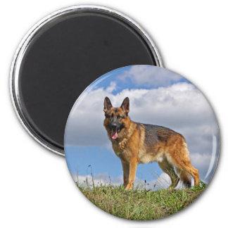 German Shepherd on Hill Magnets