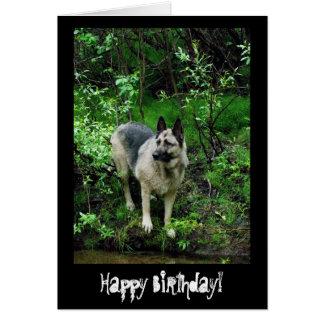 German Shepherd on the Shore; Happy Birthday Card
