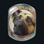 "German Shepherd  Picture Glass Candy Jar<br><div class=""desc"">Sweet German Shepherd  dog  looking alert.</div>"