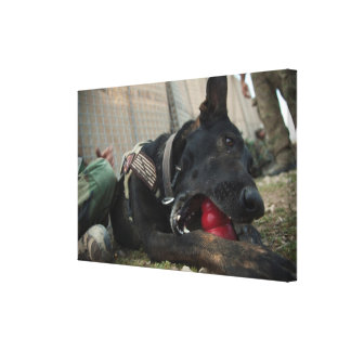 German Shepherd Playing With Dog Toy Gallery Wrapped Canvas