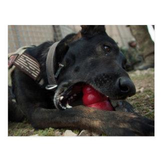 German Shepherd Playing With Dog Toy Postcard