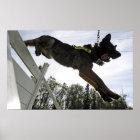 German Shepherd Police Dog Poster