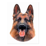 German Shepherd Portrait Post Cards