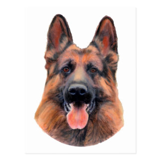 German Shepherd Portrait Postcard