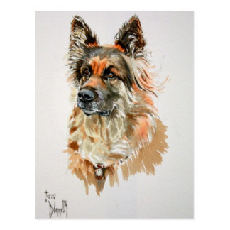 German Shepherd Post Card