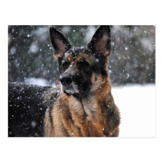 German Shepherd Post Cards