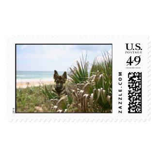 German Shepherd Postage Beachgrass