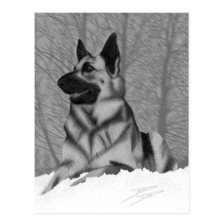 German Shepherd Postcard