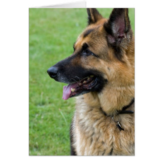 German Shepherd Profile Card