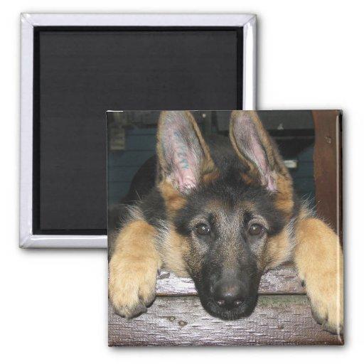 German Shepherd Pup Magnet