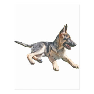 German Shepherd pup Postcard