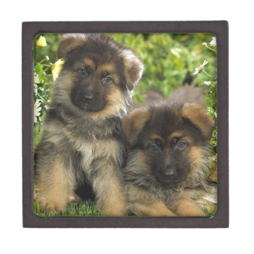German Shepherd Puppies Premium Keepsake Box