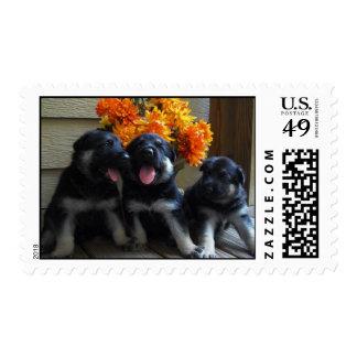 German Shepherd Puppies Stamp