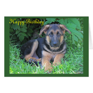 German Shepherd puppy Birthday card