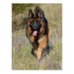 German Shepherd Puppy Dog Blank Post Card Postcard