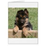 German Shepherd Puppy Greeting Card