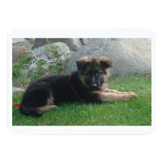 german shepherd puppy laying 2.png card