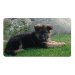 german shepherd puppy laying 2.png Double-Sided standard business cards (Pack of 100)