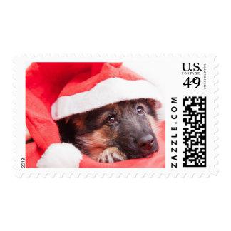German shepherd puppy postage