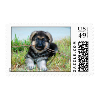 German Shepherd Puppy Postage Stamp