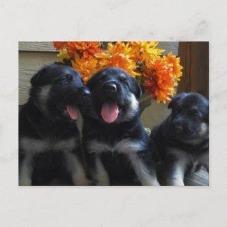 German Shepherd Puppy Postcard postcard