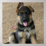 German Shepherd Puppy Print