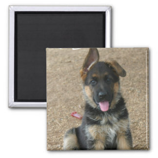 German Shepherd Puppy Square Magnet