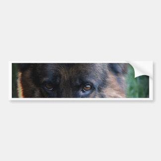 German Shepherd Randy vom Leithawald Bumper Sticker