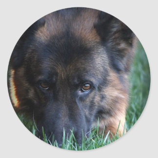 German Shepherd Randy vom Leithawald Classic Round Sticker