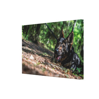 German Shepherd Resting in The Shade Canvas Print
