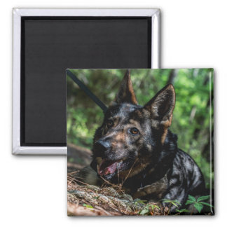 German Shepherd Resting in The Shade Magnet