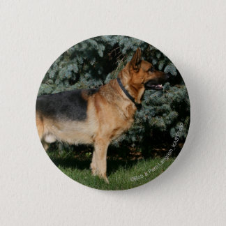 German Shepherd Show Stand Button