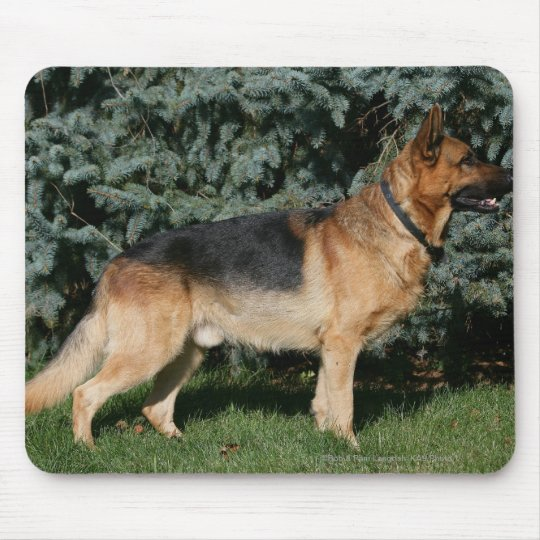 German Shepherd Show Stand Mouse Pad