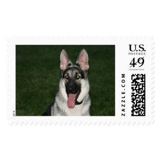German Shepherd Stamp. Postage Stamp
