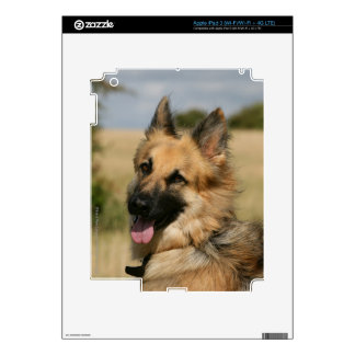 German Shepherd Sticking Tongue Out Decals For iPad 3