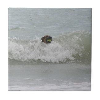 german shepherd swimming in wave tiles