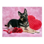 German Shepherd Valentine Postcards