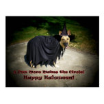 German Shepherd Witch Dog Post Card