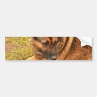 German Shepherd with One Floppy Ear Bumper Sticker