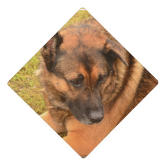 German Shepherd with One Floppy Ear Graduation Cap Topper
