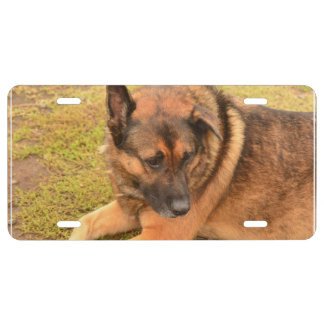 German Shepherd with One Floppy Ear License Plate