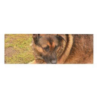 German Shepherd with One Floppy Ear Name Tag