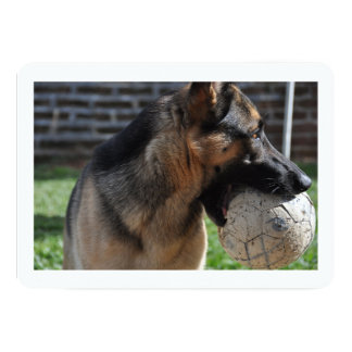 german shepherd with toy.png card