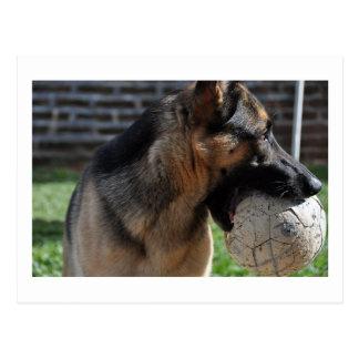 german shepherd with toy.png postcard