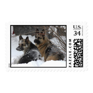 German Shepherds Best Friends Postage